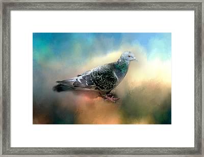 Lovely Pigeon Framed Print