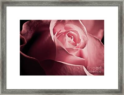 Framed Print featuring the photograph Lovely Pink Rose by Micah May