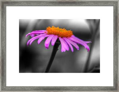 Framed Print featuring the photograph Lovely Purple And Orange Coneflower Echinacea by Shelley Neff