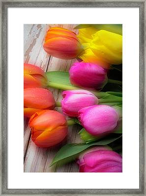 Lovely Spring Tulips Framed Print by Garry Gay