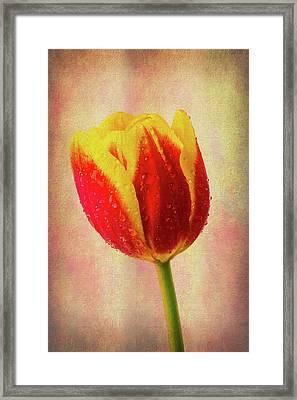 Lovely Textured Tulip Framed Print
