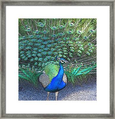 Lovely To Look At  Framed Print