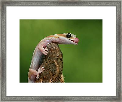 Framed Print featuring the photograph Lovely Water - Velvet Gecko by Nikolyn McDonald
