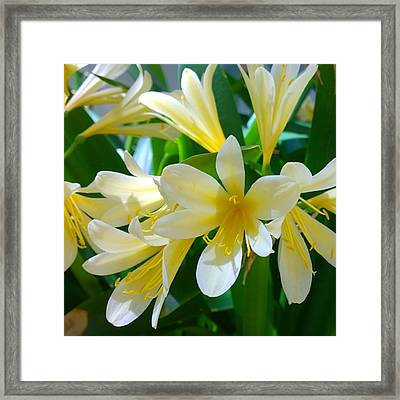 Lovely White And Yellow #flowers Framed Print by Shari Warren