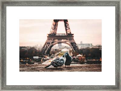 Lover Doves In Paris Framed Print