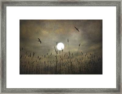 Lovers Moon Framed Print by Tom York Images