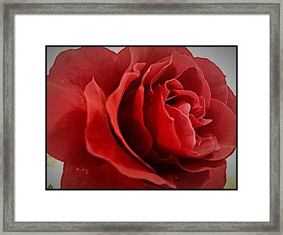 Love's Bloom Framed Print