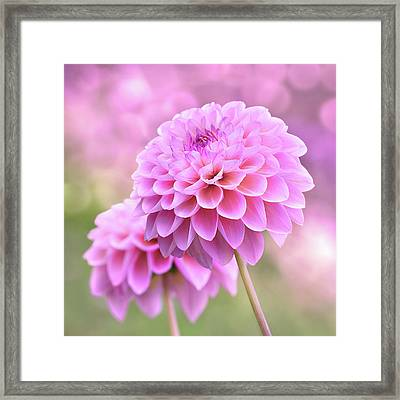 Framed Print featuring the photograph Lovestruck Romeo by John Poon