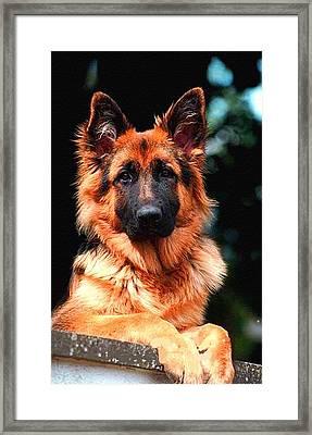 Loving Dog Creations Catus 1 No. 5 - Xau. P B Framed Print by Gert J Rheeders