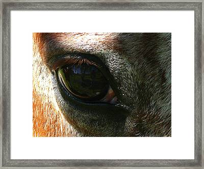 Loving Eye Framed Print