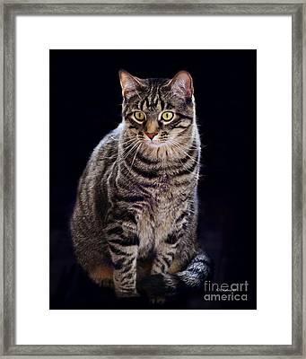 Loving Joseph Framed Print