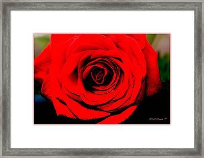 Loving Red Framed Print