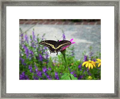 Loving Summer Framed Print
