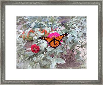 Loving The Zinnias Framed Print
