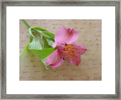Loving You Framed Print by Kathy Bucari