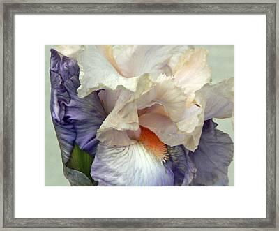 Lovingly Framed Print by Pamela Patch