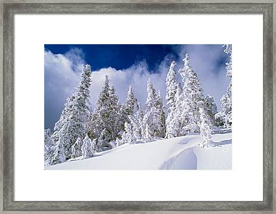 Low-angle View Of Snow-covered Pine Framed Print