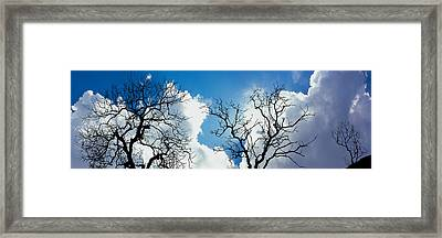 Low Angle View Of Trees Against Cloudy Framed Print by Panoramic Images