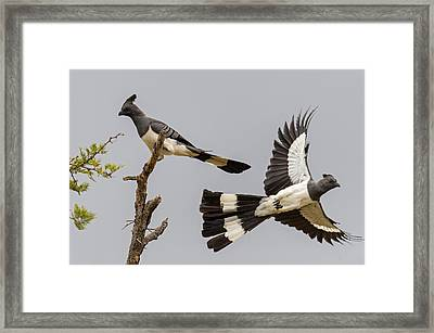 Low Angle View Of White-bellied Framed Print by Panoramic Images