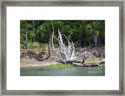 Framed Print featuring the photograph Low Country Driftwood by Carol  Bradley