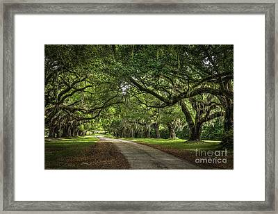 Low Country Live Oak Framed Print
