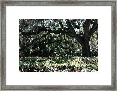 Framed Print featuring the photograph Low Country Series I by Suzanne Gaff