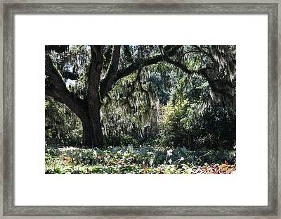 Framed Print featuring the photograph Low Country Series II by Suzanne Gaff