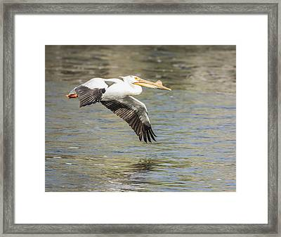 Low Flyer Framed Print by Thomas Young
