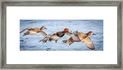 Low Glide Home Framed Print