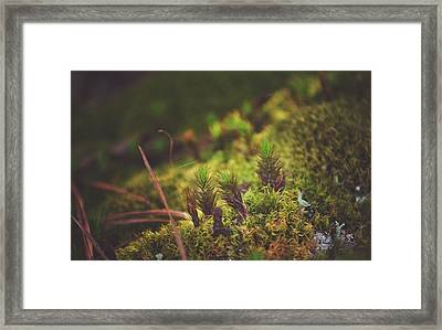 low in the valley -Loganville Georgia  Framed Print