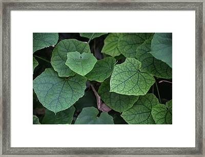 Low Key Green Vines Framed Print