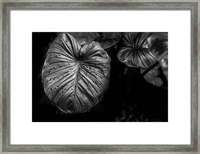 Low Key Nature Background, Textured Plants, Leaves For Decorativ Framed Print