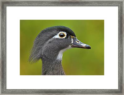 Framed Print featuring the photograph Low Key by Tony Beck