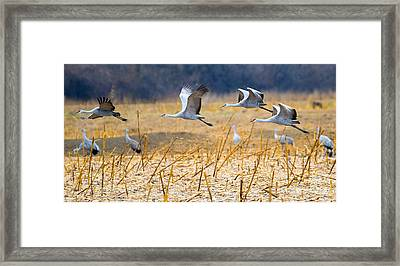 Low Level Flyby Framed Print by Mike Dawson