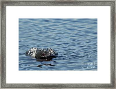 Low Lying Loon Framed Print by Natural Focal Point Photography