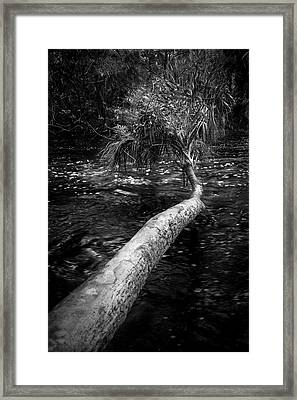 Low Palm Framed Print by Marvin Spates