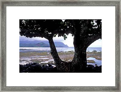 Low Tide And The Tree Framed Print by Kathy Yates