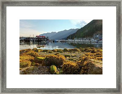Low Tide At Horseshoe Bay Canada Framed Print by David Gn