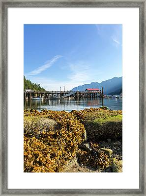 Low Tide At Horseshoe Bay Canada On A Sunny Day Framed Print by David Gn