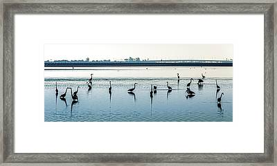 Framed Print featuring the photograph Low Tide Gathering by Steven Sparks
