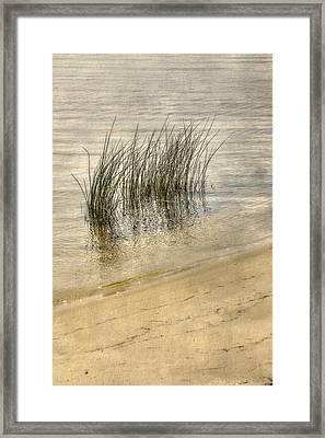 Low Tide Grass Framed Print by Randy Steele