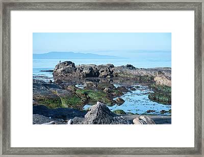 Low Tide On Botany Bay Framed Print