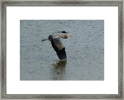 Framed Print featuring the photograph Low Wing by Kathleen Stephens