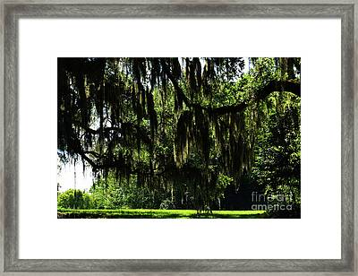 Lowcountry Landscape Framed Print
