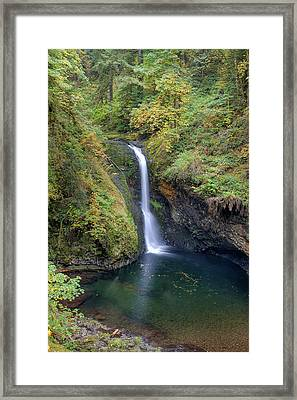 Lower Butte Creek Falls Plunging Into A Pool Framed Print by David Gn