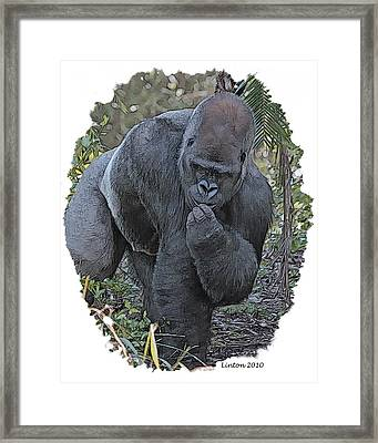 Lowland Silverback Gorilla Framed Print by Larry Linton