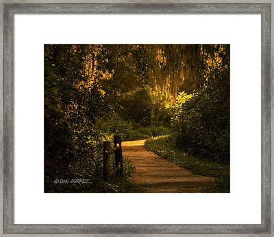 Framed Print featuring the photograph Loxahatchee Boardwalk by Don Durfee