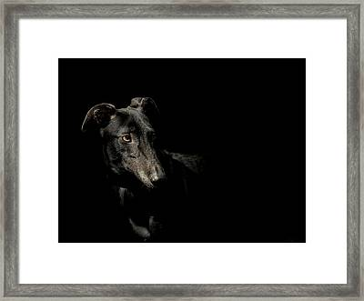 Loyality Framed Print by Paul Neville