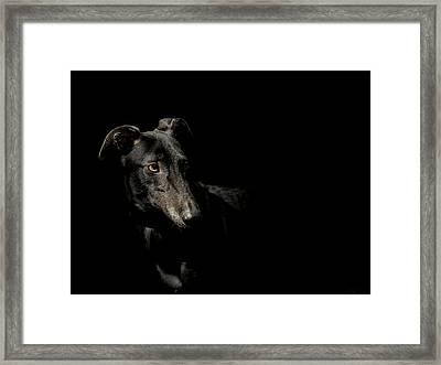 Loyality Framed Print by Paul Neville