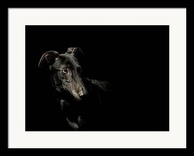 Greyhound Photographs Framed Prints